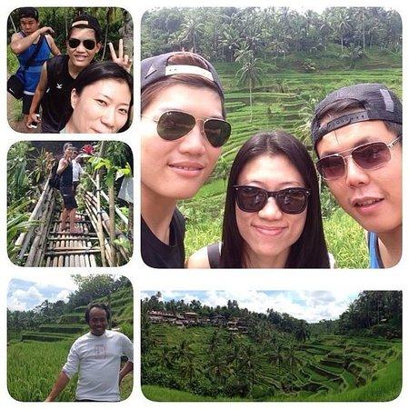 Tegalalang Rice Terrace : Rice terrace