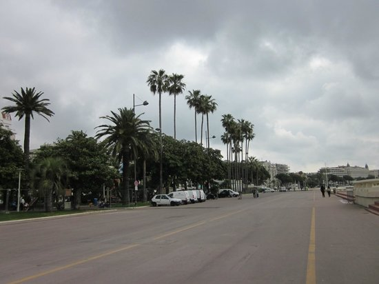 La Croisette : Palm trees along the shore