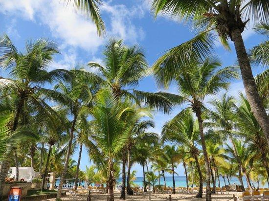 Viva Wyndham Dominicus Palace  |   Bayahibe, Repubblica Dominicana