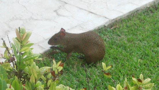 Allegro Playacar: 1 of the cute little critters roaming about the resort