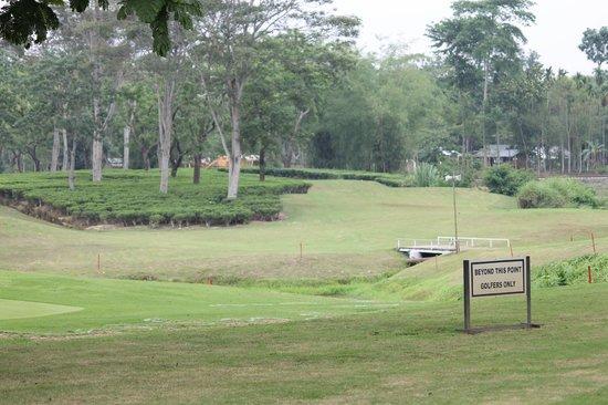 Kaziranga Golf Resort : Golf course with Tea Garden