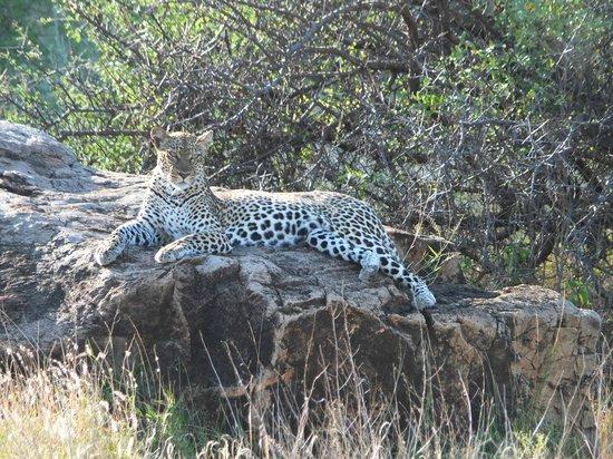 Samburu Sopa Lodge: Samburu