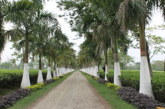 Kaziranga Golf Resort: Pathway to Entrance