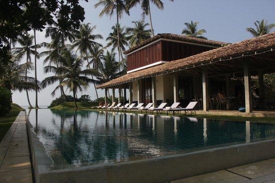 Frangipani Tree: piscina
