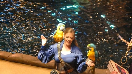 Pirates Voyage: Birds of a feather.........