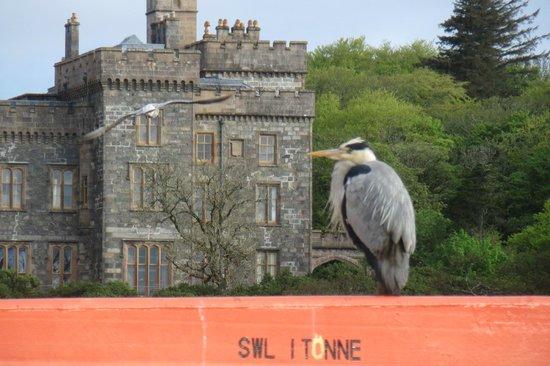Caladh Inn: Bird I met down by the Harbour