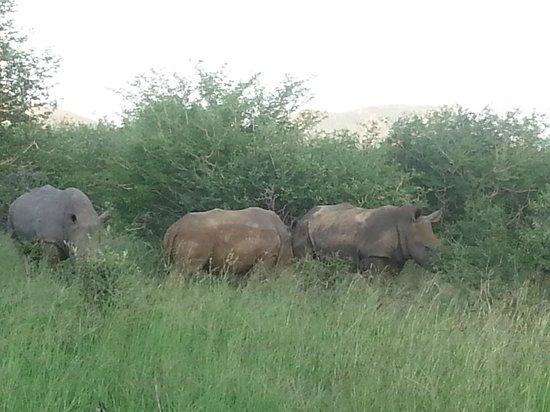 Tau Game Lodge : Rhino