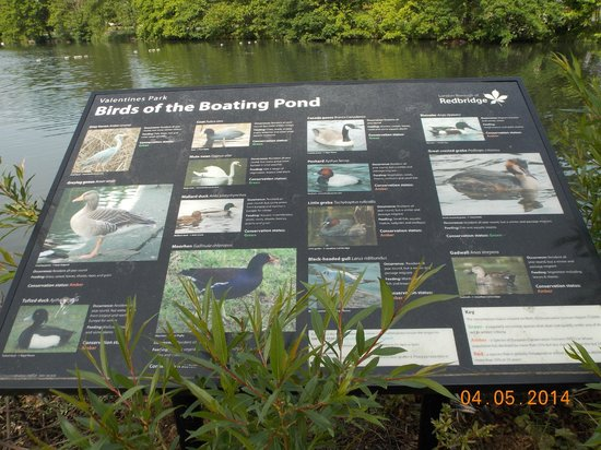 Valentines Park: The different species of birds you can find here