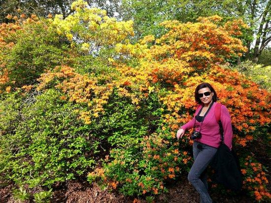Valentines Park: Coloured bushes
