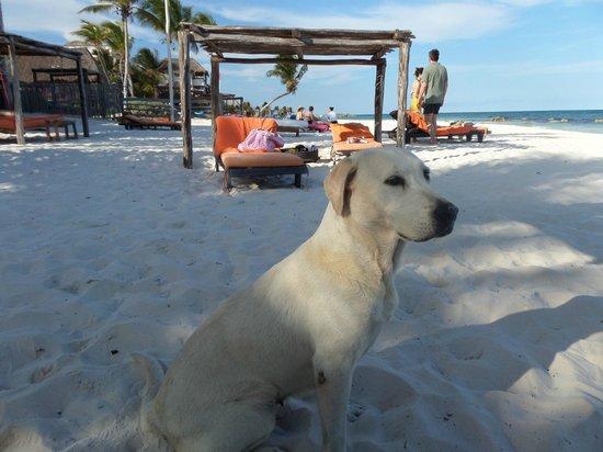 Amansala Eco Chic Resort: Beach Loungers and Hotel Mascot