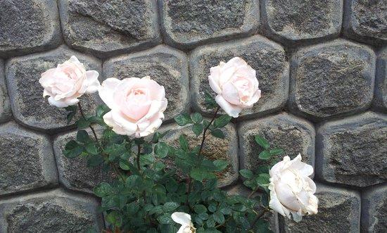 Sagar Holiday Resorts: White roses near hotel lobby