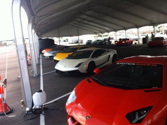 Exotics Racing : Escoge el Lambo que quieras
