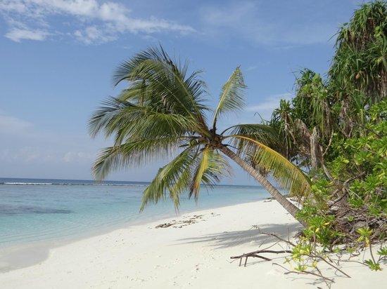 Coco Palm Dhuni Kolhu: plage de notre côté
