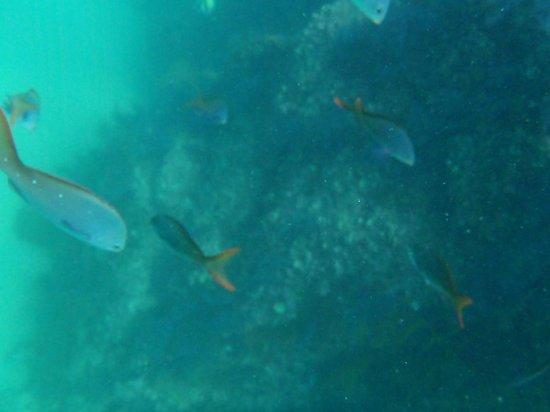 Baja Outback - Day Tours: Snorquel