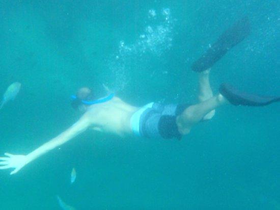 Baja Outback - Day Tours: snorquel en Pelicano