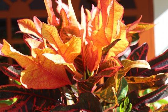 Veronique's Guesthouse : Растения на территории отеля
