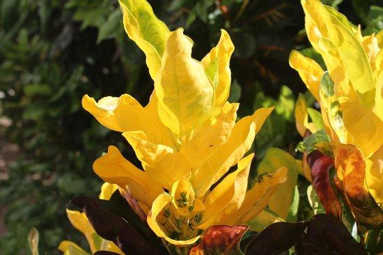 Veronique's Guesthouse : Растения возле дома