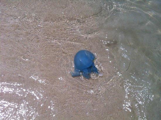 Hilton Ras Al Khaimah Resort & Spa: Beautiful Blue Medusa