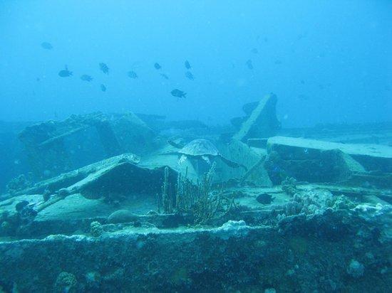 Aqua Marine Dive Center: Turtle swimming over a wreck