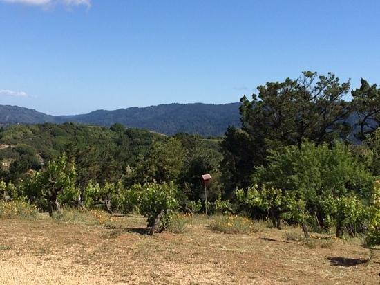 Ridge Vineyards : Ridge Vinyards