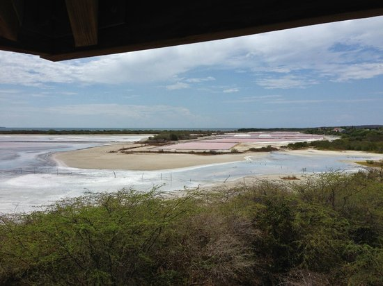 Cabo Rojo National Wildlife Refuge: the pink is from the algae, flamingo eat it and turn pink