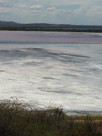 Cabo Rojo National Wildlife Refuge: closer look of salt flats