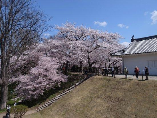 Yamagata castle: 東大手門の土塁の高さがすごい