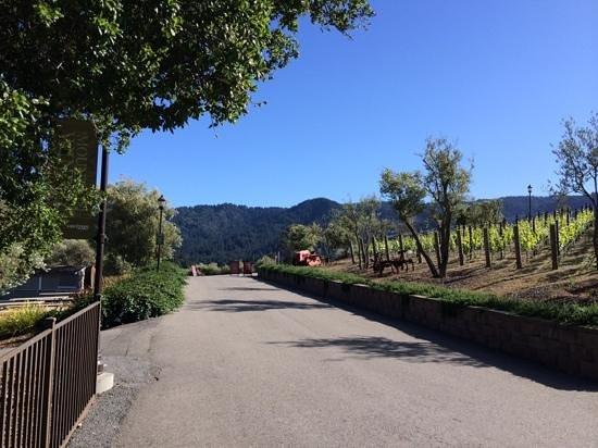 The Mountain Winery: Mountain Winery path