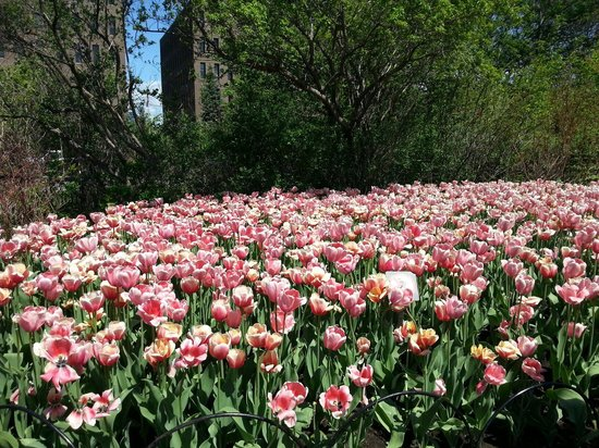 Dows Lake Pavilion : Festival des tulipes