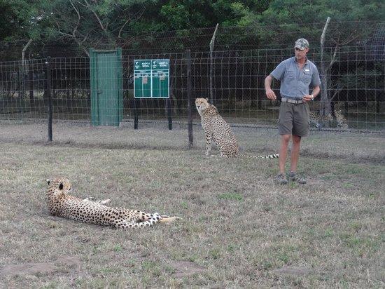 Emdoneni Lodge : Cheetah tour