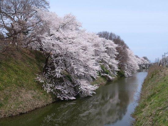 Kajo Park: お堀にこぼれそうなくらい咲いてました