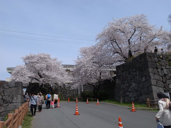 Kajo Park: 南門の桜は記念撮影の人が多い