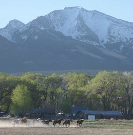 Zapata Ranch - A Nature Conservancy Preserve: Horses Coming in for the Morning Rides