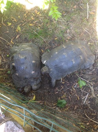 Villaggio Li Cucutti: les tortues de l'hotel