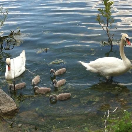 Lake Varese bicycle trail: Biandronno