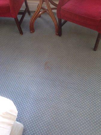 Tara Towers Hotel: Filthy Carpet !