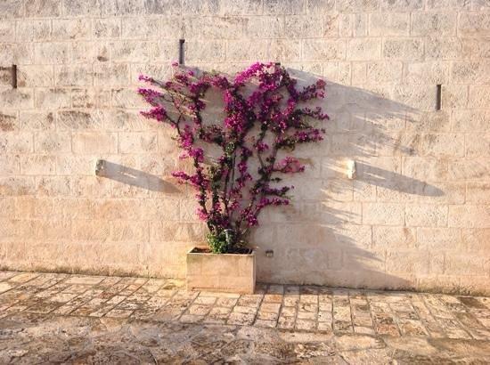 Masseria San Domenico : fiori