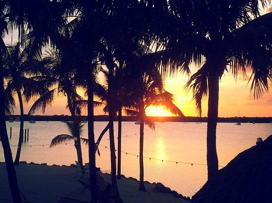 Coconut Palm Inn: The View