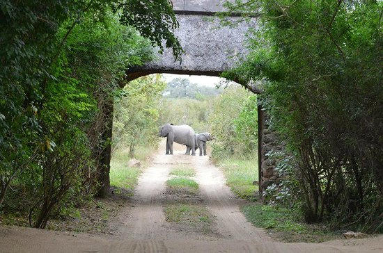 Savanna Private Game Reserve : Elephants eating right outside the gate