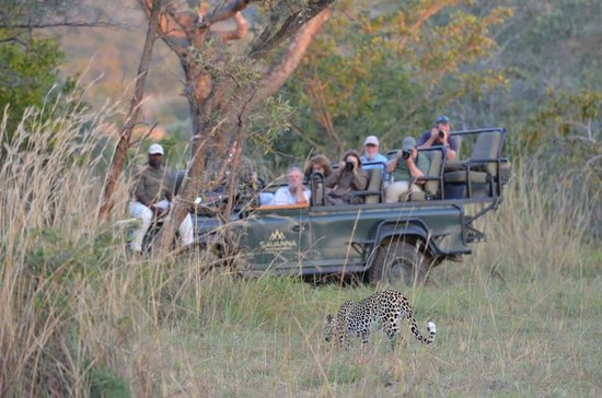 Savanna Private Game Reserve : Capturing one of the areas many leopards on film