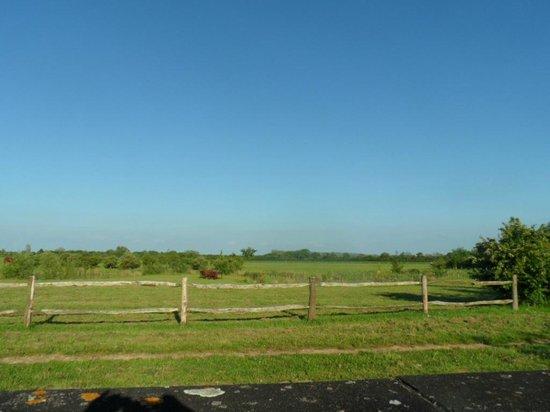 Merton Grounds: view
