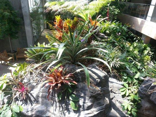 Denver Botanic Gardens : Foilage