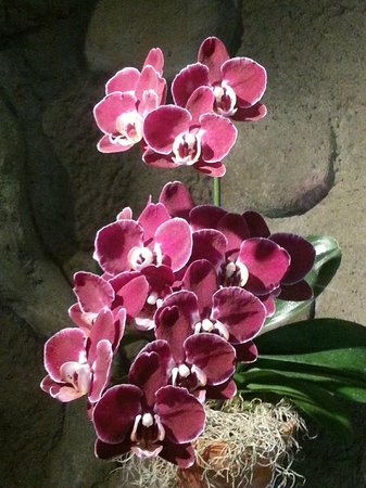 Denver Botanic Gardens: Orchid area