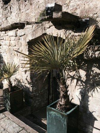 Hotel du Vin Poole: Planters outside