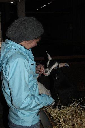 The Dandelion Hideaway: feeding goats