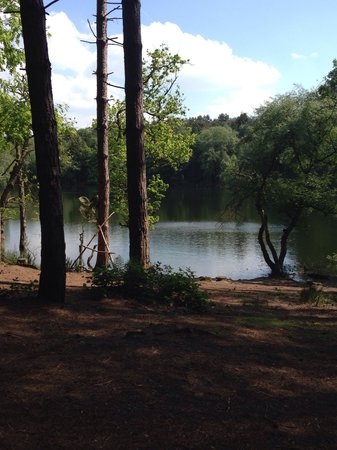Delamere Forest: Lovely little lake