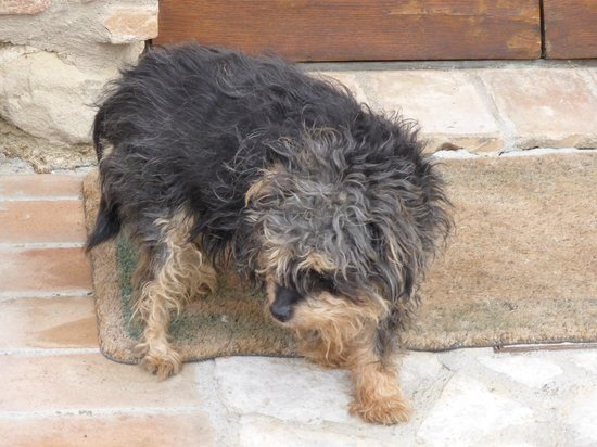 Agriturismo Casale dei Frontini : The fourteen year old pooch