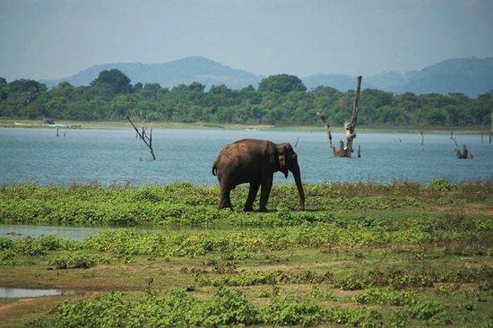 elephant picture of udawalawe national park uda walawe. Black Bedroom Furniture Sets. Home Design Ideas