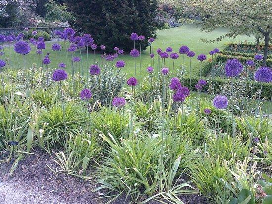Bodnant Garden: allums
