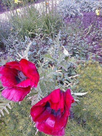 Bodnant Garden: Poppy